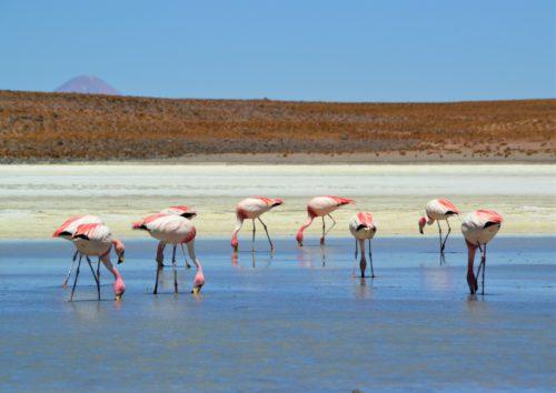 Salar de Uyuni: welke touroperator?
