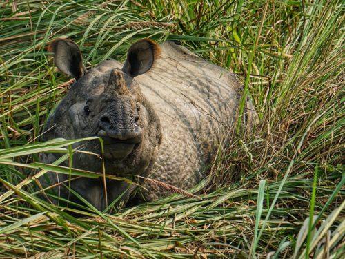 Neushoorns en tijgers spotten in Chitwan National Park