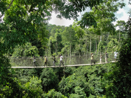 Ghana Kakum National Park