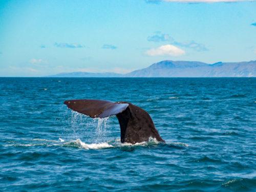 Walvissen spotten in Kaikura