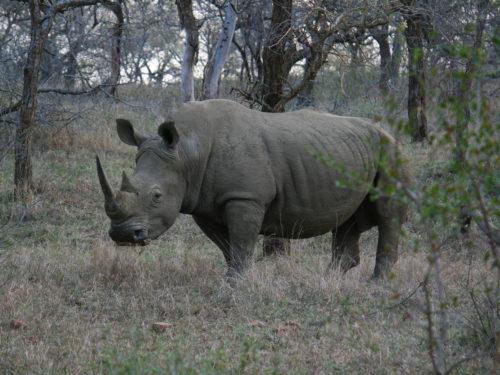 Hluhluwe national park, een van de mooiste parken in Zuid-Afrika